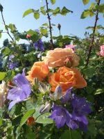 Blumenstrauß-Mischung